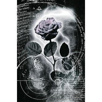 poster Mercurio Rose, Reinders
