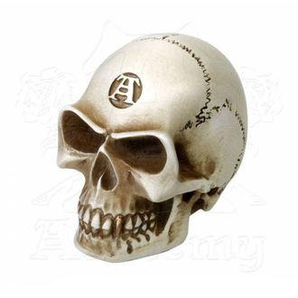 decorazione (pomello) ALCHEMY GOTHIC - Alchemist Gear Knob: Bone, ALCHEMY GOTHIC