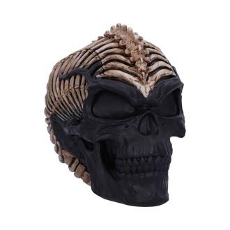 Decorazione Colonna Vertebrale Cranio, NNM